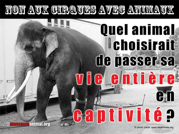 http://www.massacreanimal.org/fr/img/circus7b.jpg