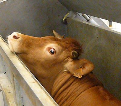Une scène de crime pour dénoncer la consommation de viande