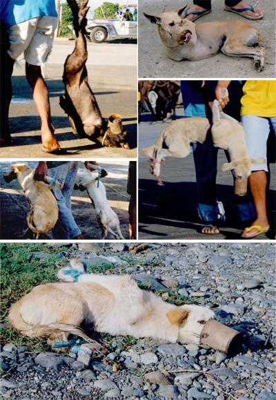 http://www.massacreanimal.org/img/chiens_asie.jpg