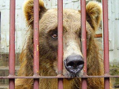 La Grèce interdit les animaux dans les cirques