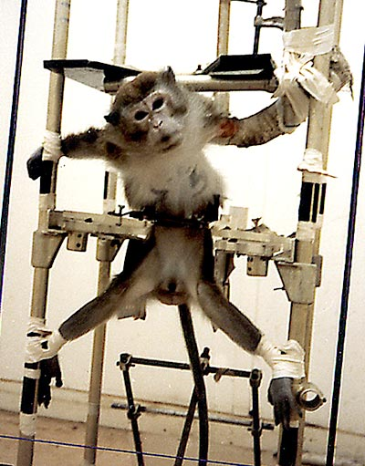 http://www.massacreanimal.org/img/tests01.jpg